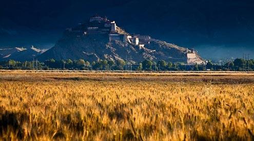 Barley Fields around Zhongshan Fort Ruins in Gyantse
