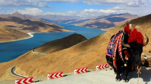 Stunning Yamdrok Lake and Tibetan Yak