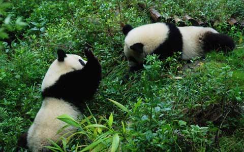 Travel to Tibet from Chengdu
