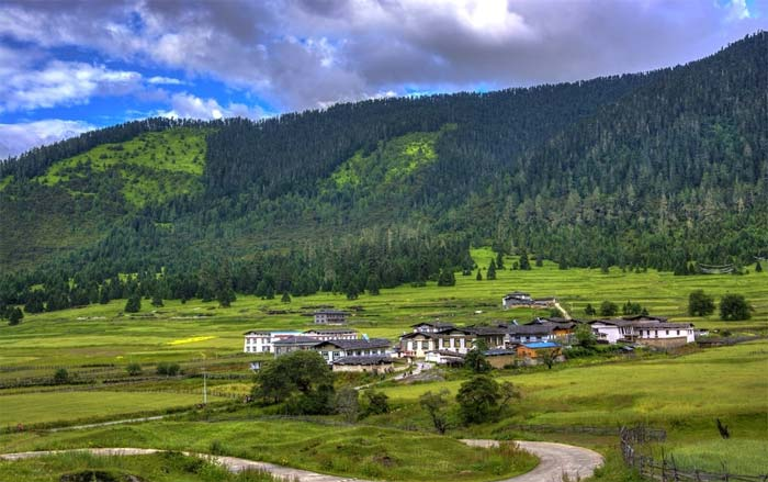 While visiting Lunang Forest, you will see a typical highland meadow landscape, which is totally different from the landscapes of other parts of Tibet.