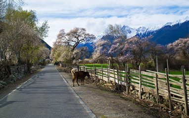 10 Days Photography Tour of the Eastern Switzerland of Tibet
