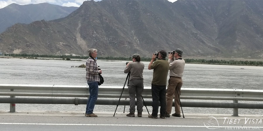 Bird watching by Lhasa River