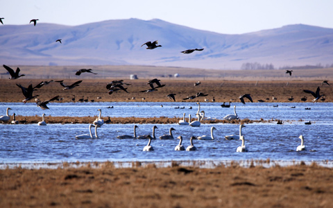 Top Six Places to Enjoy Wild Birds in Lhasa in Winter