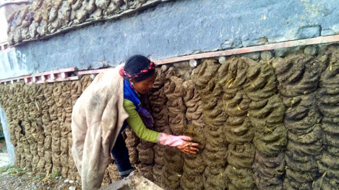 Tibetan build wall with yak dung