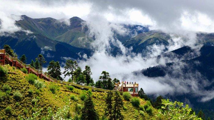 Lunang Forest