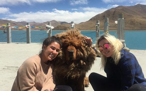 Tibetan Mastiff Photography