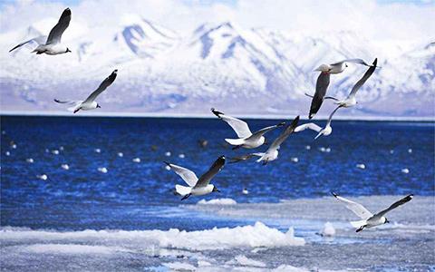 Birdwatching Tour Routes in Tibet