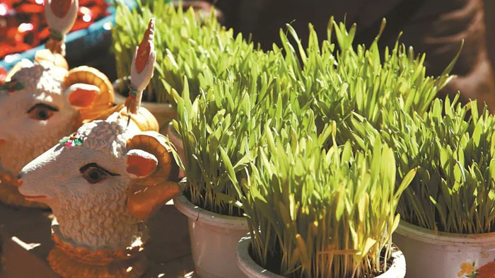 Sheep head and gree barley shoots sold at designated market stalls in Lhasa