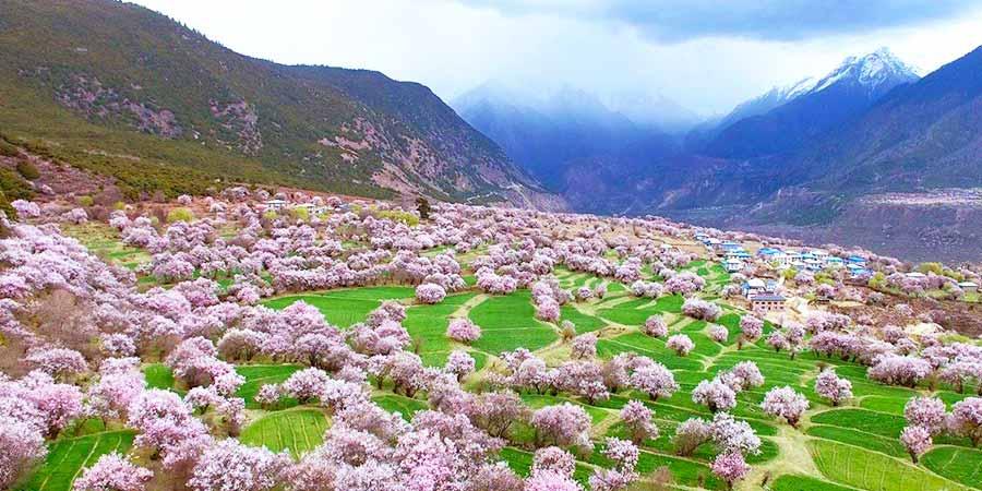 Galacun Peach Blossoms