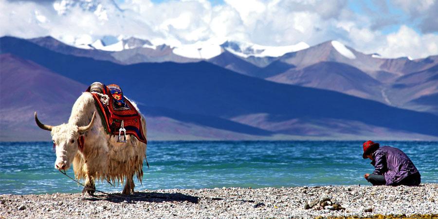 Local Tibetan and his yak at Namtso