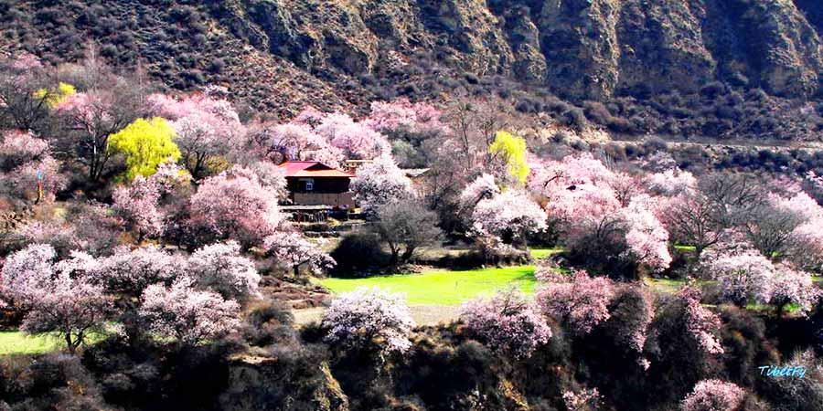 Qingduocun Peach Blossoms