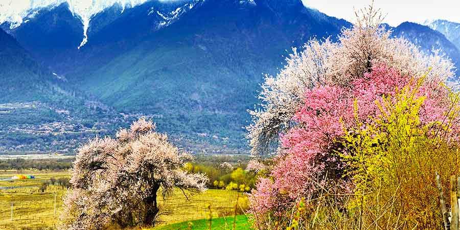 Runacun Peach Blossoms