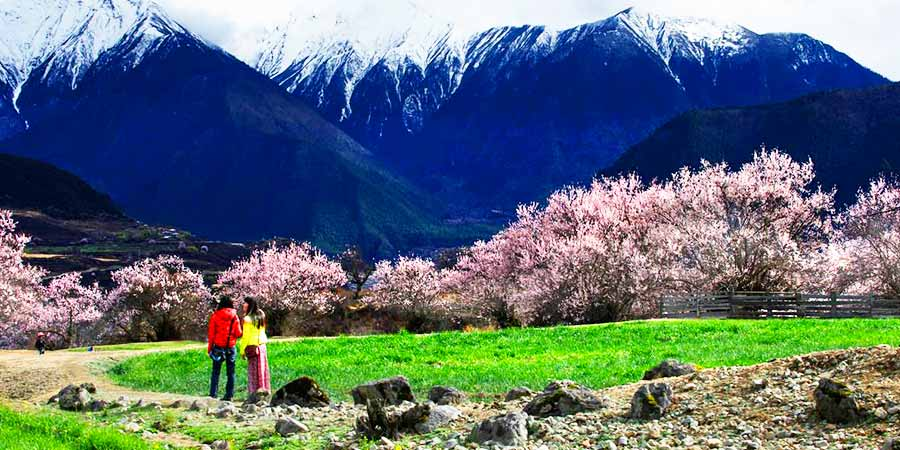 Peach Blossoms of the Suosongcun and Mount Namjagbarwa