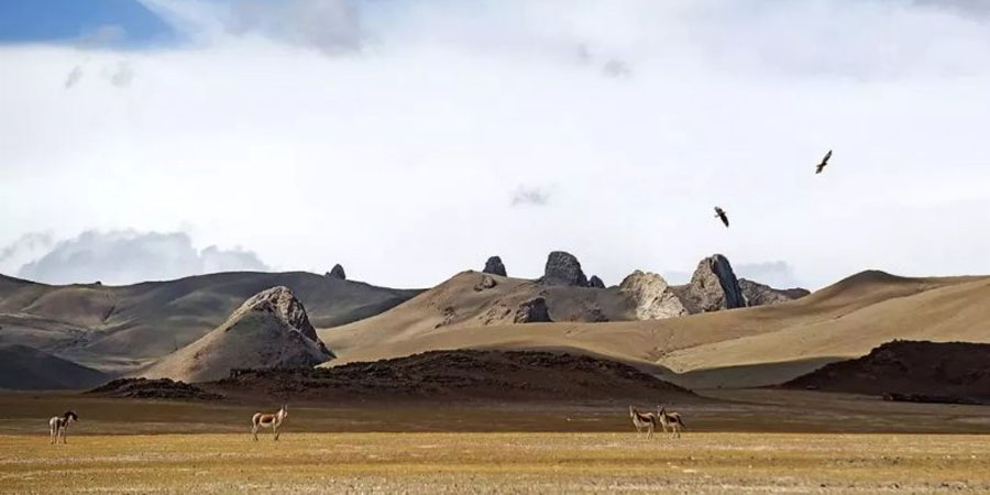 The Tibetan wild donkeys and vultures on the way